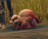 猟具生物カモシワラシ